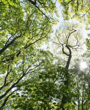 Bäume Beitrag