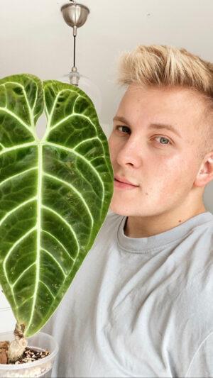 Plant-Fluencer